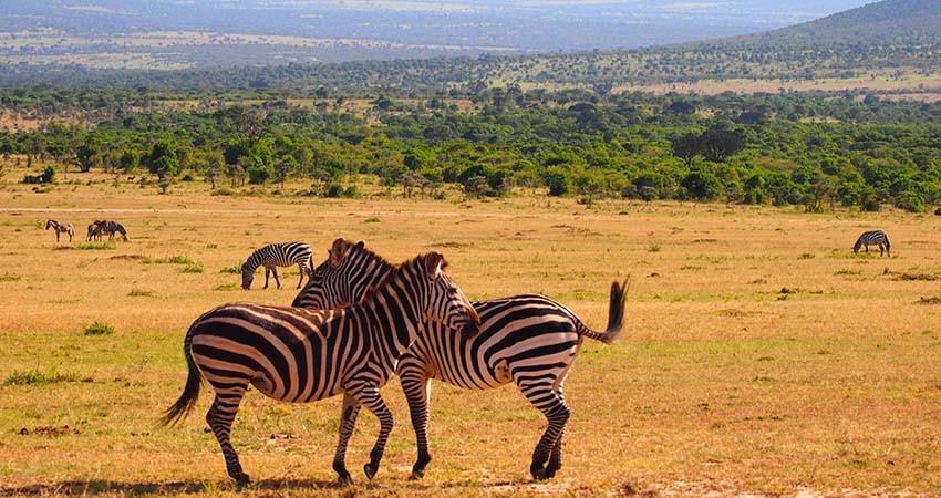 nairobi, kenya, zbor, bilet, avion, ieftin, travelator