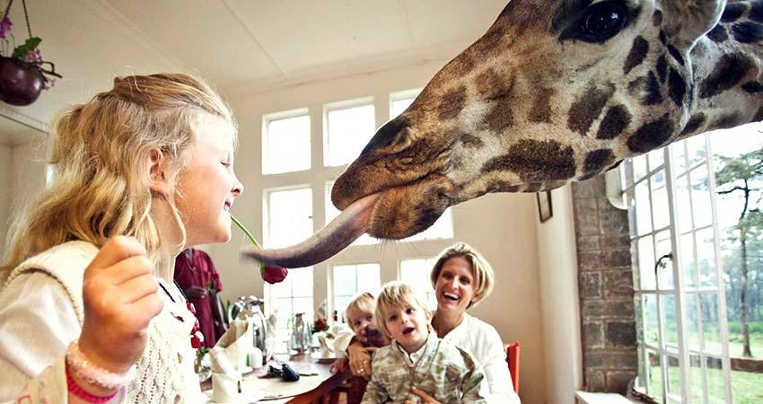 giraffe hotel, nairobi, kenya, travelator