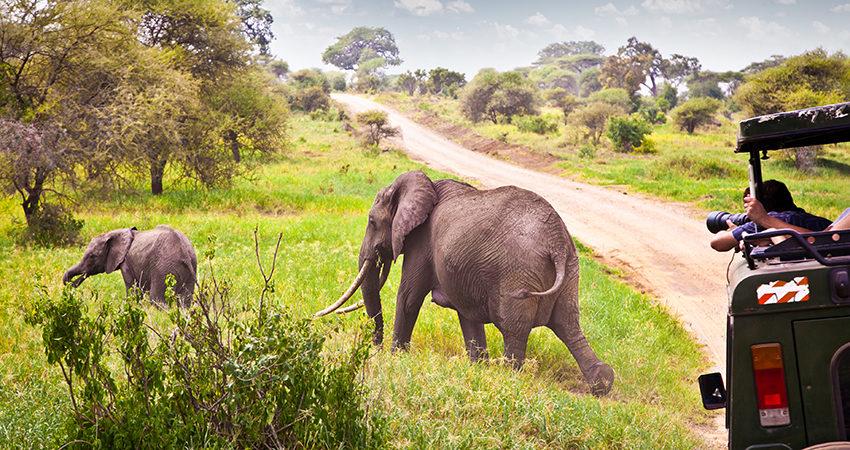 zbor ieftin, nairobi, kenya, travelator.ro, pont, diy