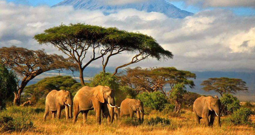 zboruri ieftine, tanzania, dar es salaam, kilimanjaro, travelator.ro, ponturi, calatorii, idei de vacanta