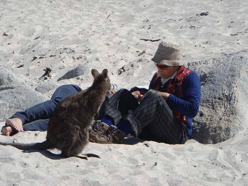 calatorii, ponturi vacanta, tasmania, australia, travelator.ro, triptil.ro, jurnal de calatorie, oana iancu