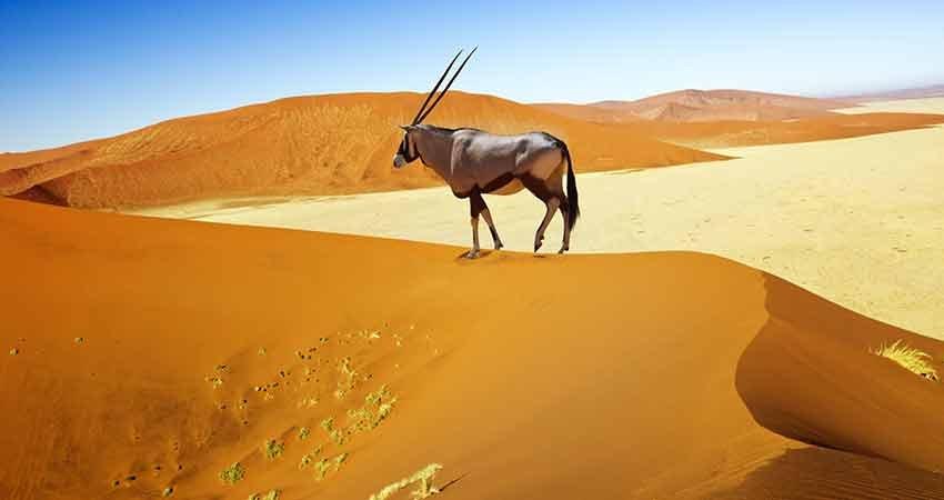 zboruri ieftine, travelator.ro, africa, namibia, zbor ieftin bucuresti - windhoek, calatorii, ponturi vacanta,